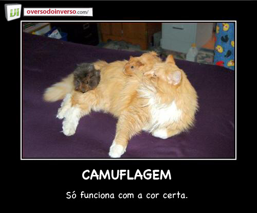 camuflagem